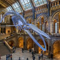 Top Things To See And Do In London, England With Kids